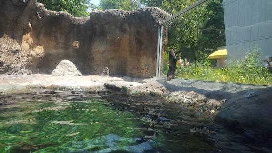 Virginia Aquarium Marine Science Center Sea Otters