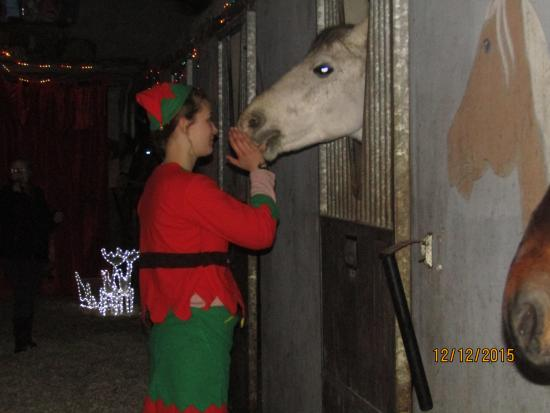 SANTA, with boskill equestrian caherconlish,ireland.wwwlimerickhorseriding.com.2015