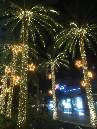 palm trees on lincoln road with christmas lights