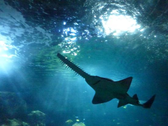Requin Magnifique Picture Of Aquarium La Rochelle La
