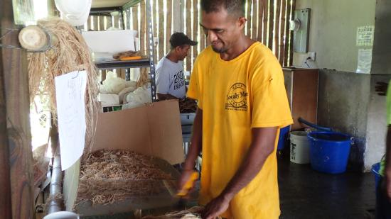 Kosrae, Micronesia: Chopping up the fibers before washing them.