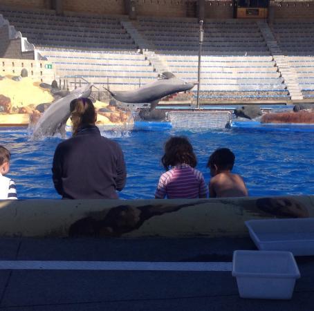Dolphin encounter: photo2.jpg