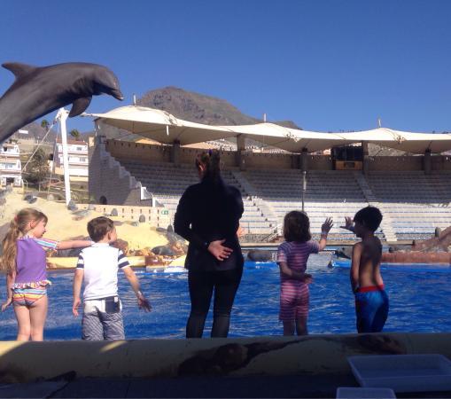 Dolphin encounter: photo3.jpg