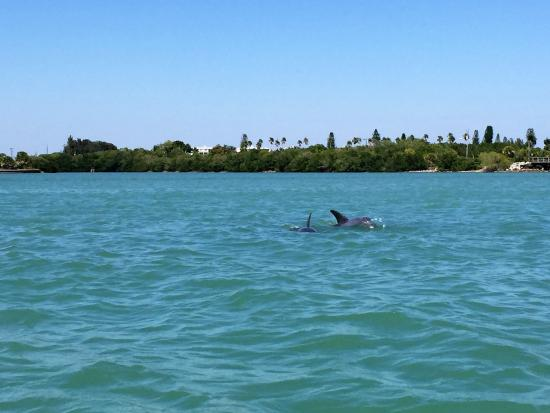 Rotonda West, FL: kayaking with the dolphins