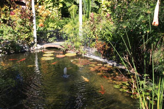 Beautiful pond full of fish inside the gardens - Picture ...