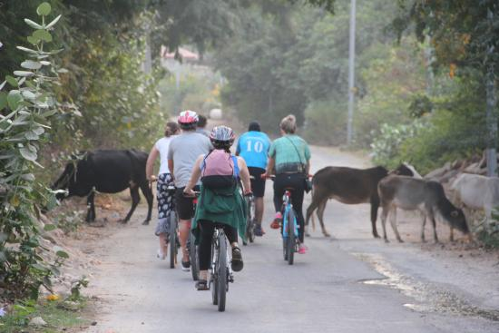 Lets Trip Bicycle Tours