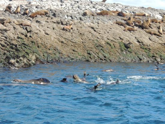 Stanley Seal Cruises: Seals swimming and resting