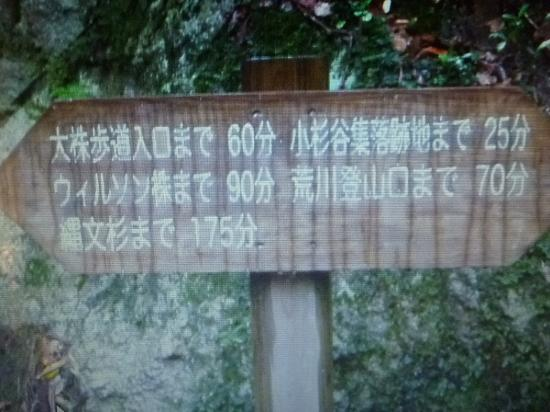Yakushima Eco Tour