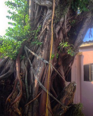 Basilico Hotel: Чудо дерево во дворе
