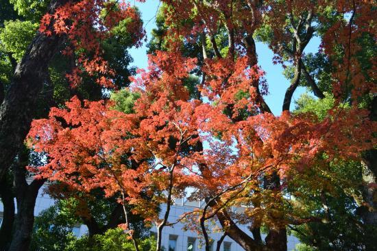 Korekiyo Takahashi Memorial Park