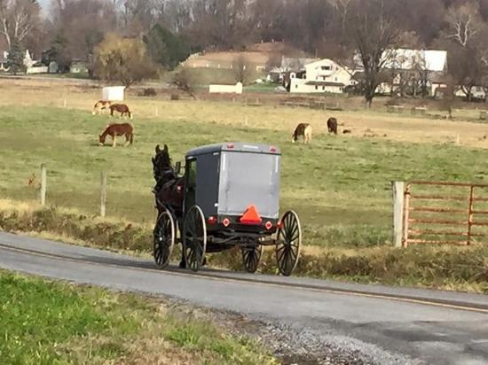 Another Amish Mode Of Transport Picture Of Amish Country Lancaster County