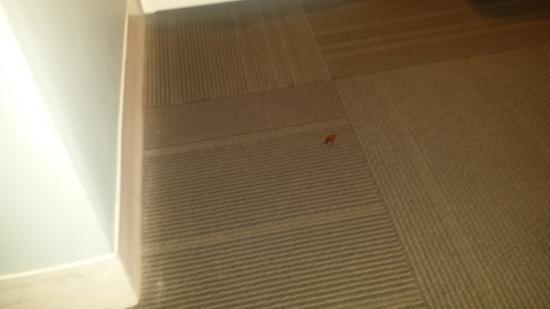 Sense Beach House: Cockroach in the room