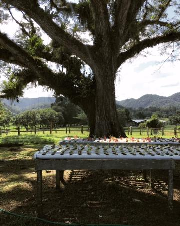 Goldeneye Resort: Pantrepant Farm Excursion