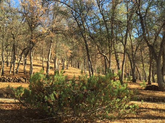 Ahwahnee, Kaliforniya: Homestead cottages
