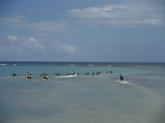 Ride Amp Swim Picture Of Chukka Caribbean Adventures Tours Ocho Rios Tripadvisor