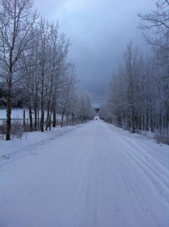 Yukon Wildlife Preserve : Trail along the reserve