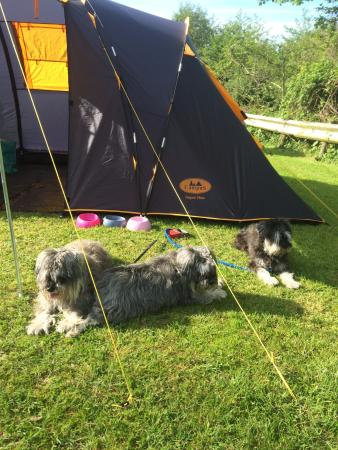 Combe Martin, UK: Mac, Lady and Lucky sunbathing and relaxing around the campsite.