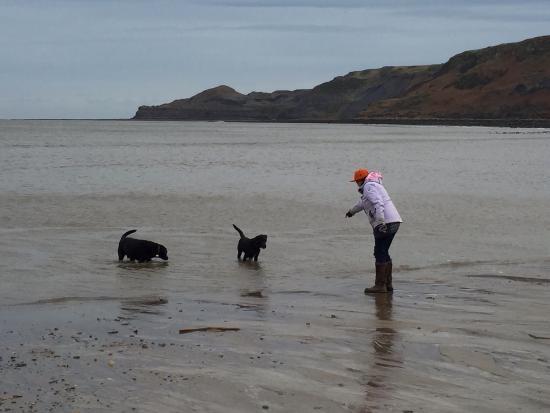South bay dog lovers meetup