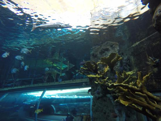 Dive With The Sharks At The Florida Aquarium Sand Tiger