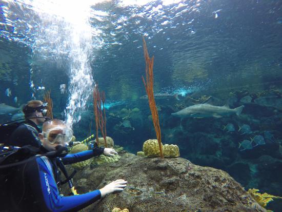 Diving At The Florida Aquarium Picture Of The Florida