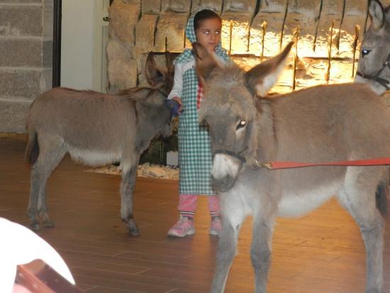 Malta Nights Extravaganza: donkeys