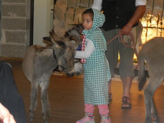 Malta Nights Extravaganza: little donkey