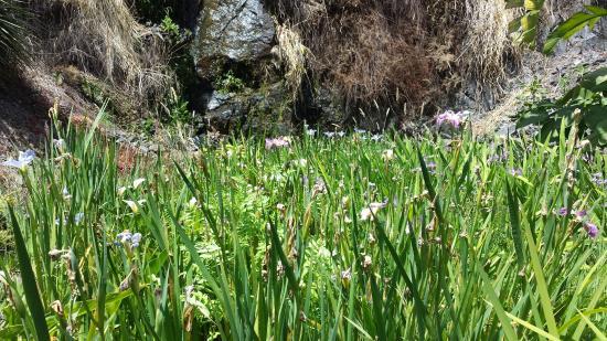 Whangarei, Selandia Baru: Valley of Flowers