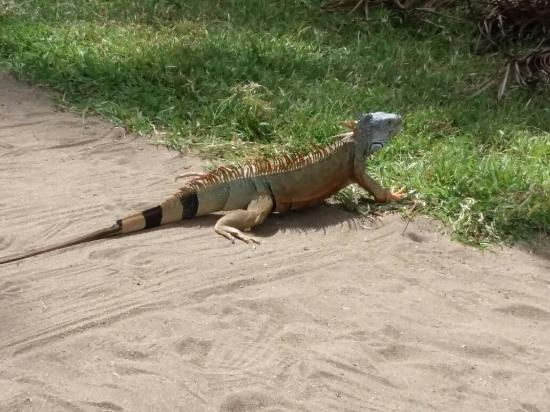 Laguna Ventanilla: una gran aventura en la LAGUNA DE VENTANILLA OAXACA