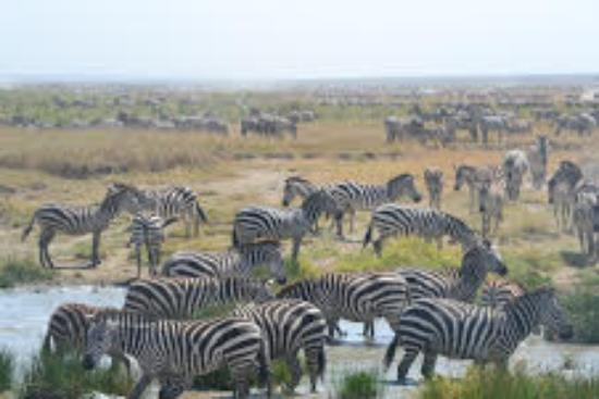 Safaris-R-Us - Day Tours: As far as the eye could see...
