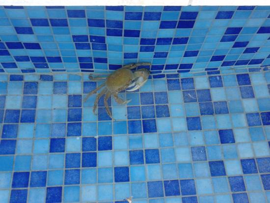Trouver dans piscine a tout les matins picture of melia for Jardines del rey