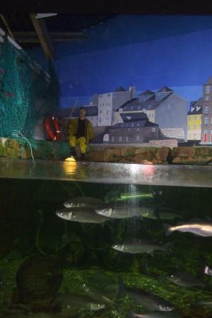 ... Promenade - Picture of Galway Atlantaquaria, Galway - TripAdvisor