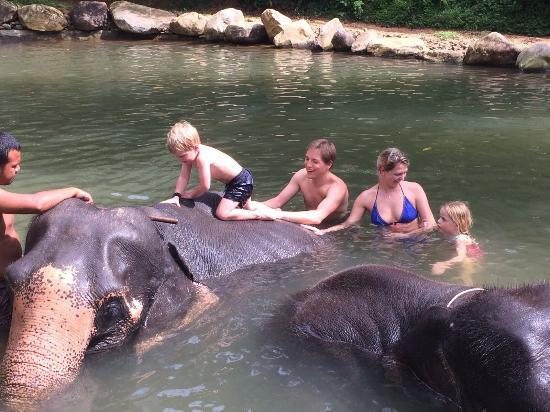 photo4.jpg - Picture of Phang Nga Elephant Park, Phang Nga ...