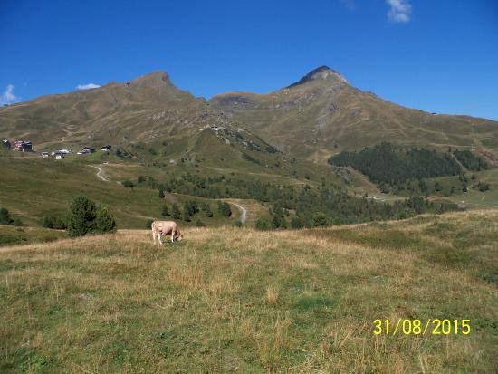 Grindelwald, Suiza: peace and quiet