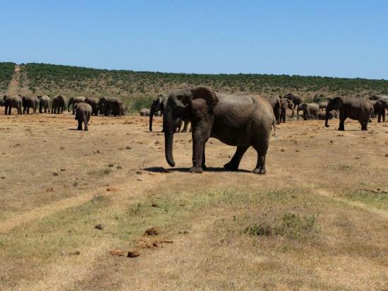 Addo, Sudáfrica: IMG_20151218_104447_large.jpg