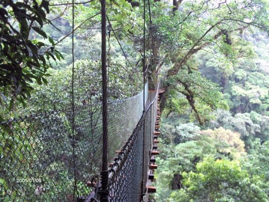 Heliconias Lodge: Uno de nuestro puentes colgantes.