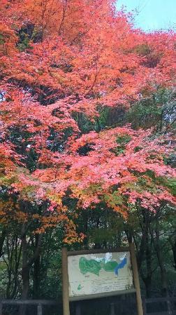 Midori no Bunkaen