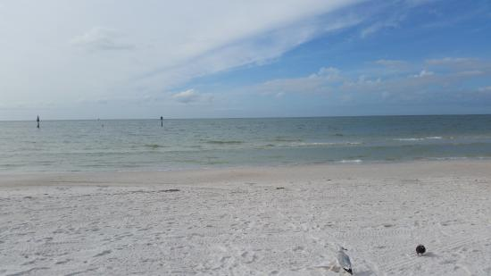 hogan beach shop clearwater fl hours