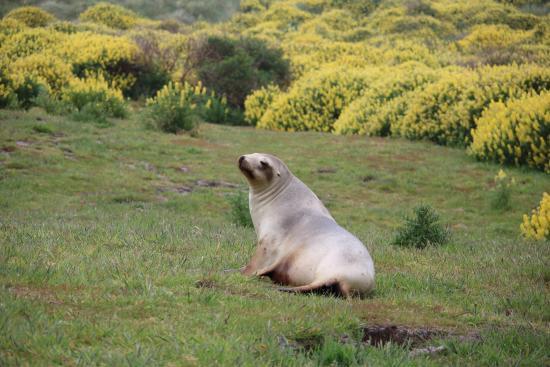Back to Nature Tours: Amazing wildlife Otago Peninsula