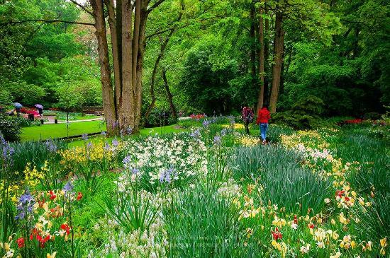 Distesa di aiuole fiorite nel parco foto di keukenhof for Aiuole fiorite immagini