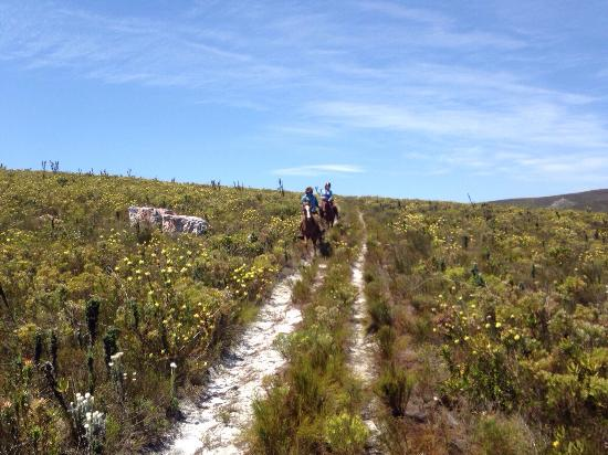 Farm 215 Nature Retreat & Fynbos Reserve: Horse riding in the reserve