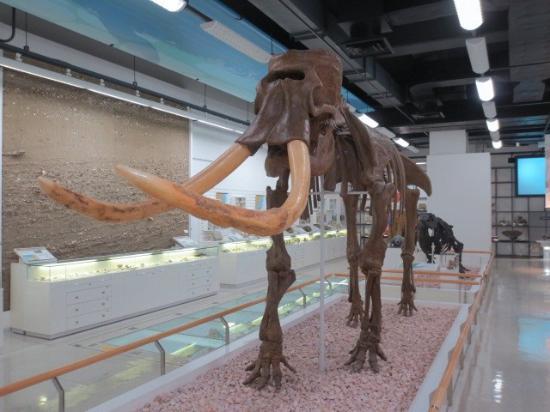Akita Prefecture Museum