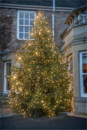 Wentbridge, UK: Xmas Tree