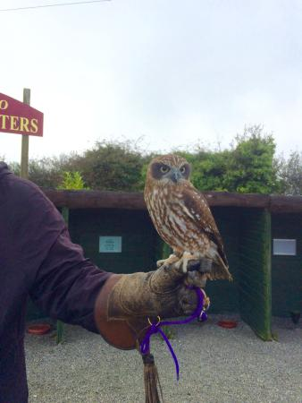 St Columb Major, UK: Owl 2