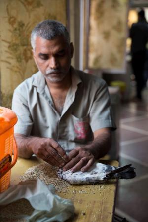 Charity Birds Hospital: Volunteer at Charity Bird Hospital feeding pigeon