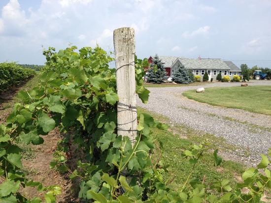 Sanborn, NY: The Tasting Room at Long Cliff Vineyard & Winery Inc., is open year-round!