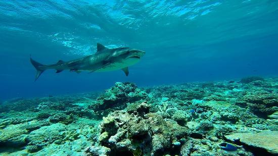 Dive Center Aquaventure