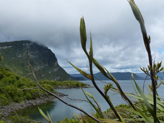 Te Urewera National Park: Native flax at the edge of Lake Waikaremoana