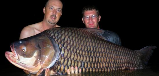 Jurassic Mountain Resort & Fishing Park : Giant Siamese Carp