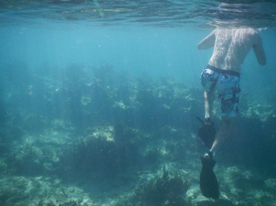 Oyster Pond, Isla de San Martín: DSCN0863_large.jpg