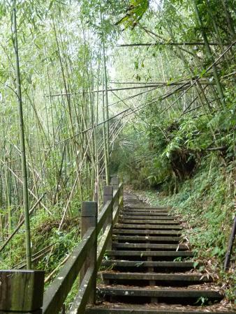 Jiayi Dadongshan Forest Trail
